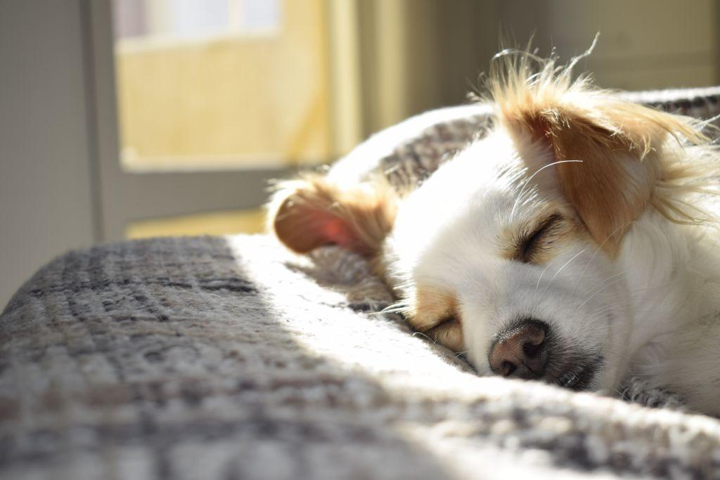 Read more about the article Pour passer une longue vie avec vos animaux de compagnie, assurez-le !