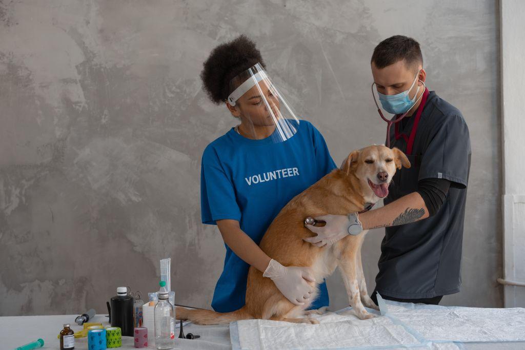chien vétérinaire assurance